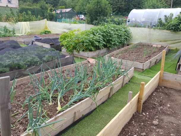 Letham Climate Challenge Allotments